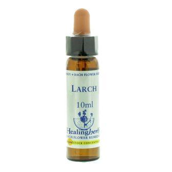 Healing Herbs Larch